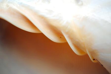 Interior spiral axis of a seashell.  Shallow DOF