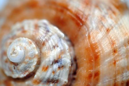 Spiral seashell, closeup, shallow DOF