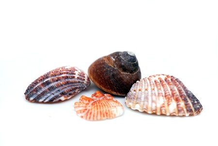 A group of seashells isolated on white. Shallow DOF.