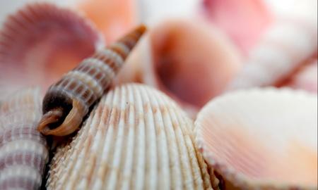 Assorted small seashells Stock Photo
