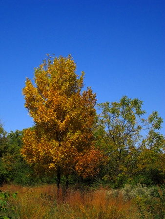 Autumn foliage begins to turn color to bright red, orange, and yellow. Stock Photo - 10804314