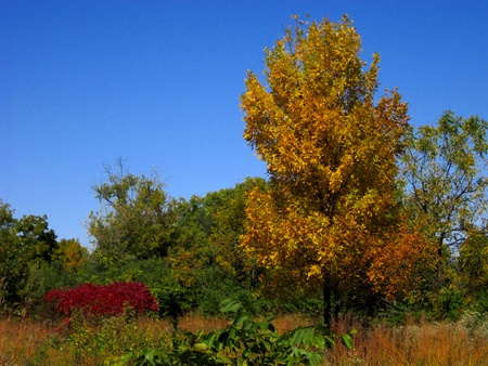 Autumn foliage begins to turn color to bright red, orange, and yellow. Stock Photo