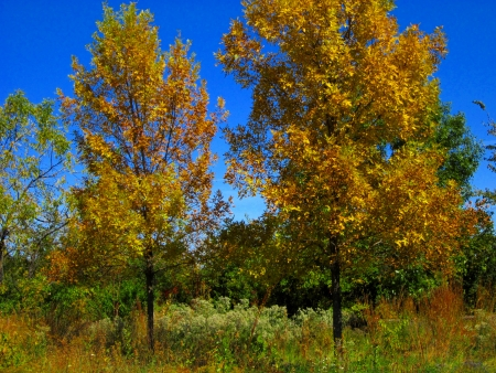 Autumn foliage begins to turn color to bright red, orange, and yellow. Stock Photo - 10804324