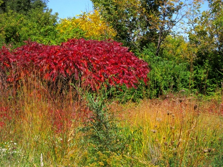 Autumn foliage begins to turn color to bright red, orange, and yellow. Stock Photo - 10804326