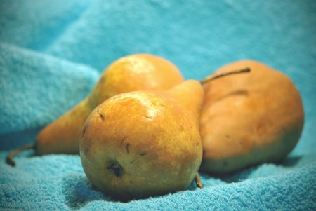 Pears on a blue towel  photo
