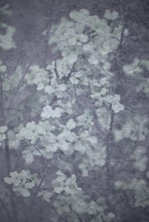 Floral grunge background with vignette effect  Reklamní fotografie