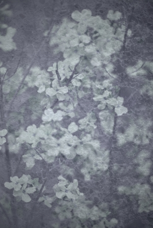 scruffy: Floral grunge background with vignette effect  Stock Photo