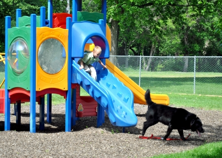 Boy and dog dismounting the playground equipment via the slide