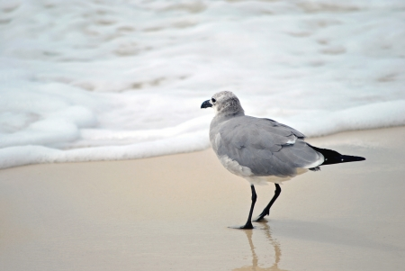 water s edge: A seagull at the water s edge Stock Photo