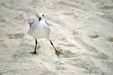 This is MY beach --the seagull attempts to stare down the photographer