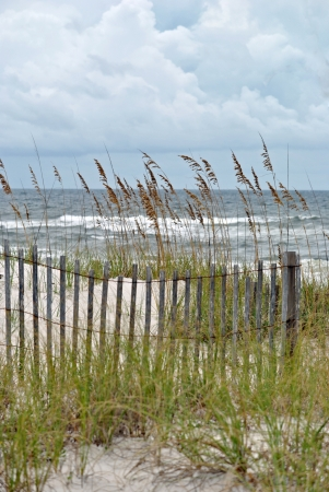 sea oats: The sea oats and the fence appear flimsy, but they prevent storm damage and beach erosion   Northern Florida, Gulf of Mexico  Stock Photo