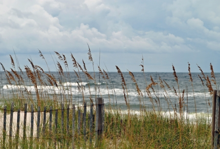 The sea oats and the fence appear flimsy, but they prevent storm damage and beach erosion   Northern Florida, Gulf of Mexico  Stock Photo