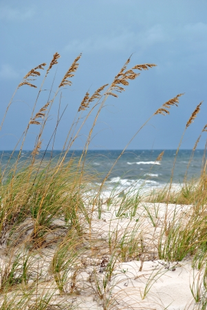 Sea oats crown the dunes on the northern Florida Gulf coast Stock Photo - 15639740