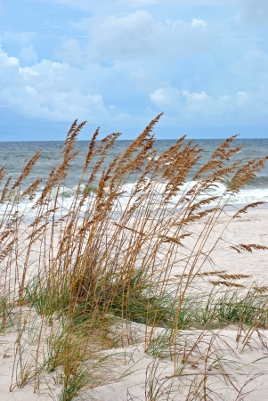 Sand dunes fringed with sea oats; northwestern Florida coast of Gulf of Mexico