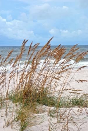 Zandduinen omzoomd met uitzicht op zee haver; noordwestelijke kust van Florida van de Golf van Mexico