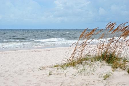 Sand dunes fringed with sea oats; northwestern Florida coast of Gulf of Mexico