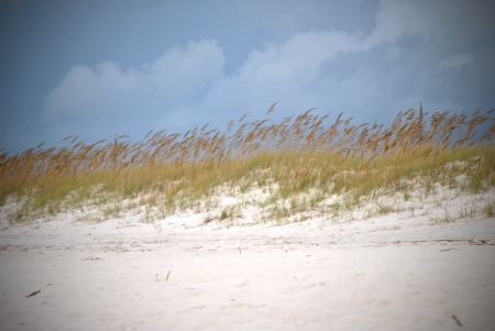 Sand dunes fringed with sea oats; northwestern Florida coast of Gulf of Mexico  Stock Photo - 15639776