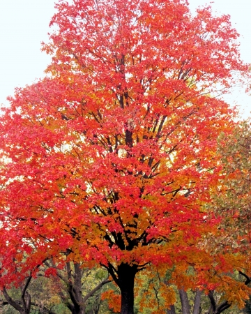 Trees showing autum color in leaves