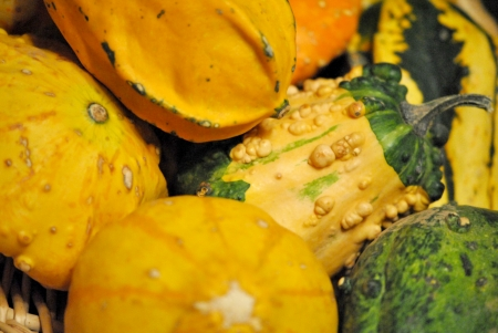 An assortment of bright colored gourds