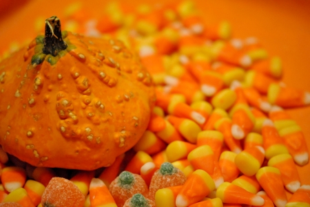 A single gourd on a bed of Halloween candy  photo