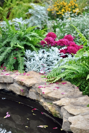 Ferns And Chrysanthemums At The Edge Of The Garden Pond Stock Photo    16420050