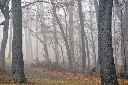 Autumn woods in the fog Stock Photo - 16486210