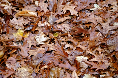 woodsy: Fallen leaves cover the ground in autumn
