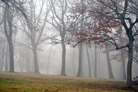 woodsy: Morning fog shrouds the trees  Stock Photo