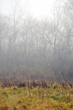 woodsy: Fog clings to the woodland