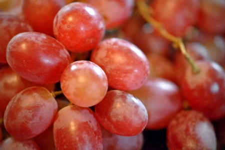 Closeup of a cluster of red grapes   Shallow DOF