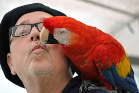 Parrot giving its owner a kiss
