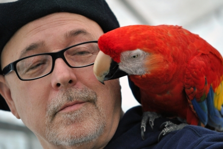 Parrot grooming its owner s face