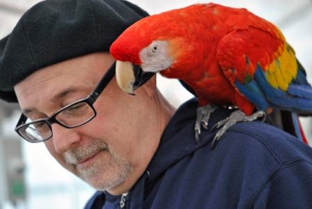 소유자의 어깨에 앵무새