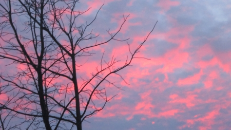 The end of a beautiul day, a bright pink sunset glwos through bare winter tree branches.
