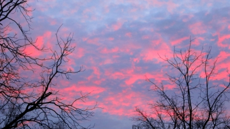 The end of a beautiul day, a bright pink sunset glwos through bare winter tree branches