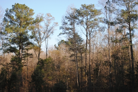 Wooded countryside in Alabama, USA, in winter