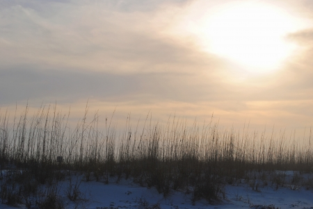 pensacola beach: A foggy winter sunset silhouettes the sea oats that top the sand dunes at Pensacola Beach, Florida, USA