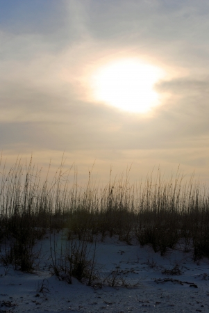 A foggy winter sunset silhouettes the sea oats that top the sand dunes at Pensacola Beach, Florida, USA