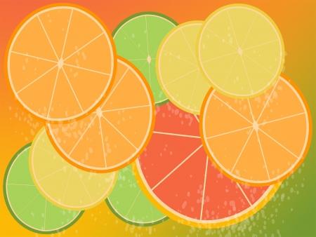Design of citrus slices  Illustration
