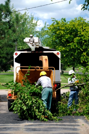 Feeding the branches into the wood chipper, a dangerous job