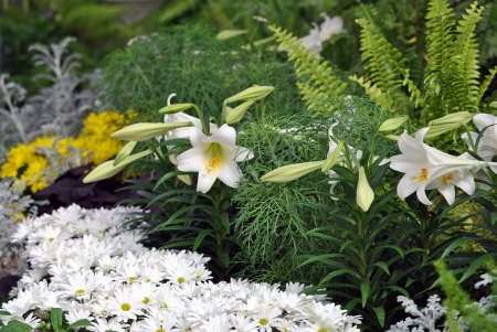 shasta daisy: An attractive grouping of lilies, chrysanthemums, and ferns