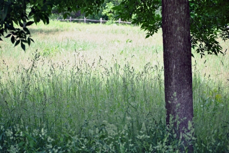 The shady spot under the tree in the grassy meadow