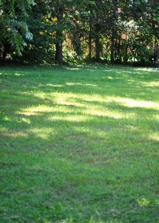 日光とまだらになる日陰の裏庭 写真素材