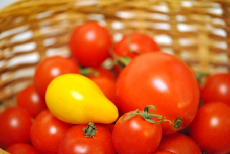 non conformist: One yellow pear tomato among a basket full of red cherry tomatoes