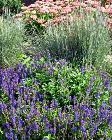 Summer flowers and ornamental grasses in the garden  Stock Photo