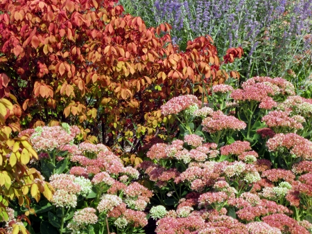 The autumn garden is bright with colored foliage and bright flowers