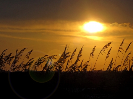 Golden sunset with sea oats  photo