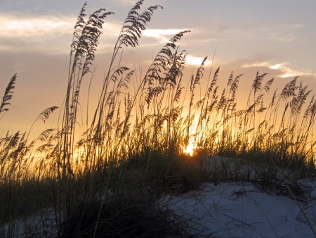 Golden sunset with sea oats  Фото со стока