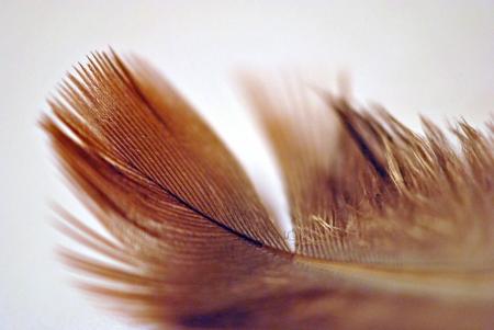 Feather; shallow DOF Stock Photo