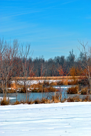 Blue sky and colorful twigs and branches brighten the winter landscape in southern Illinois USA.